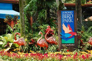 Kinh nghiệm đi chơi ở Jurong Bird Park Singapore